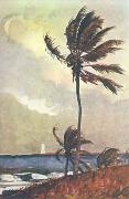 Winslow Homer Palm Tree, Nassau oil painting