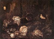 SCHRIECK, Otto Marseus van Still-Life with Insects and Amphibians ar oil painting