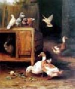 unknow artist Duck and Pigeon oil