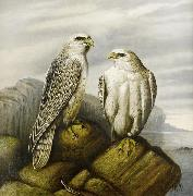 Joseph Wolf Gyr falcons on a rocky ledge oil painting reproduction