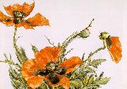 Demuth, Charles Poppies China oil painting reproduction